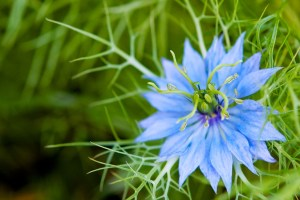 Vivid Blue Flower