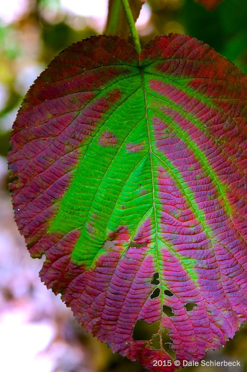 Leaf Change2