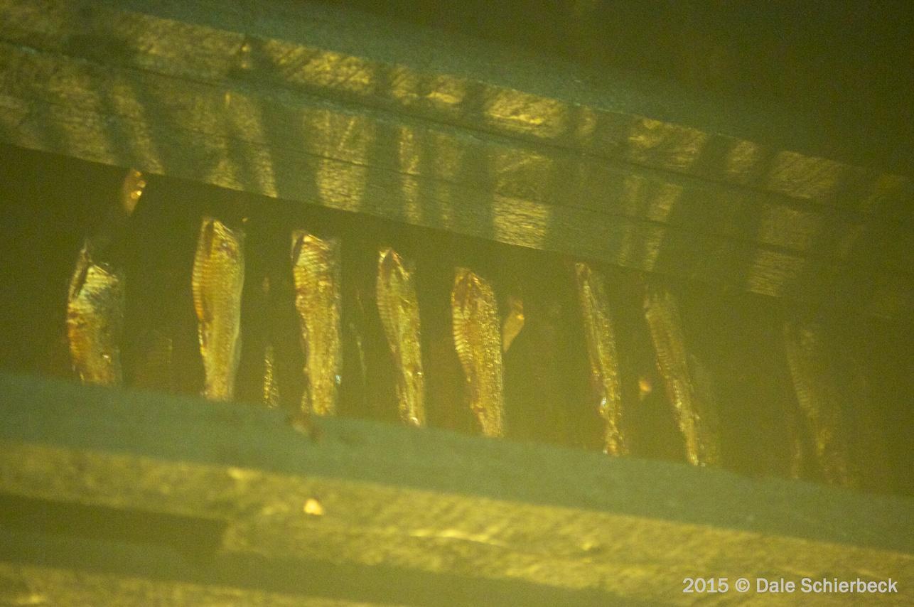 Monochrome Herring2