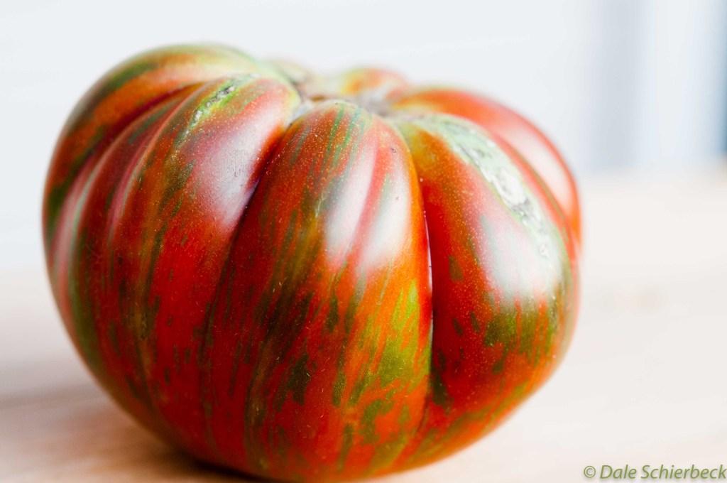Coassack Tomato -3