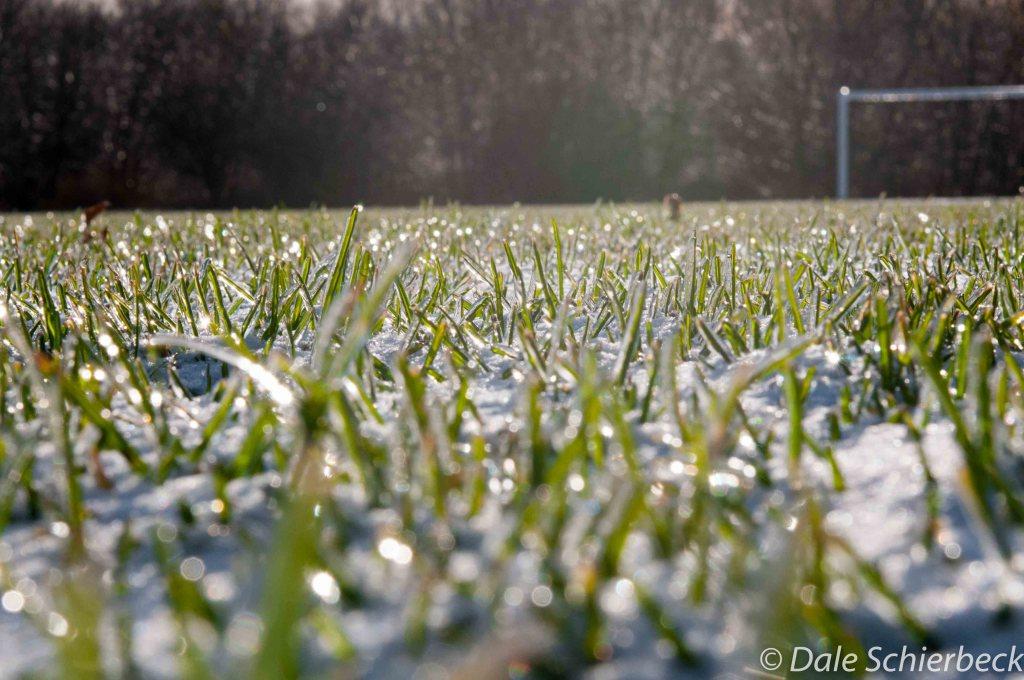 grassy-horizon2