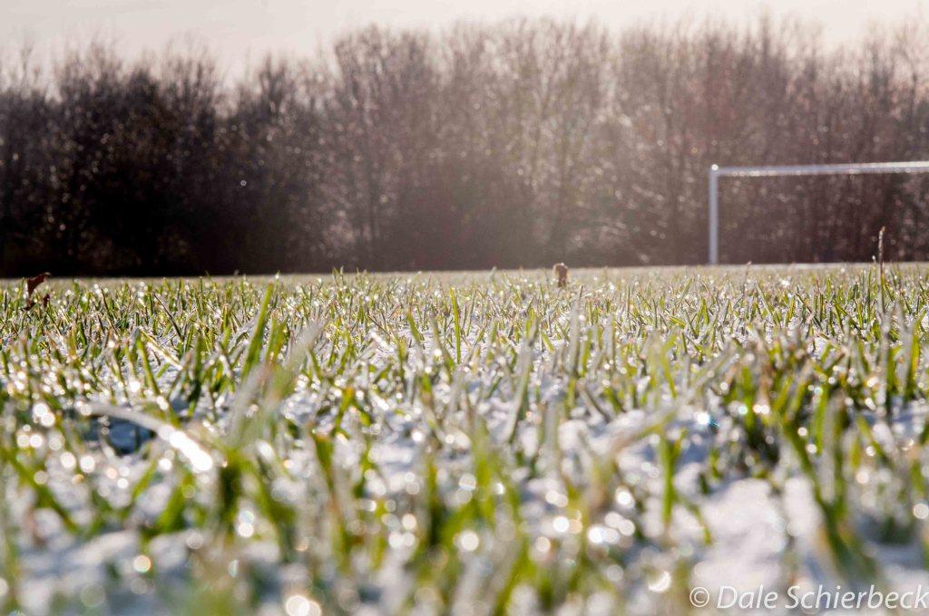 grassy-horizon3