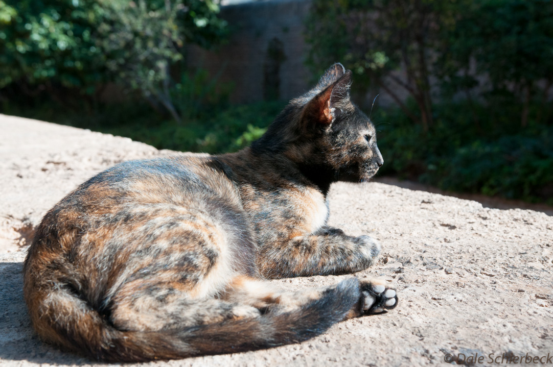 Feline Solitude3