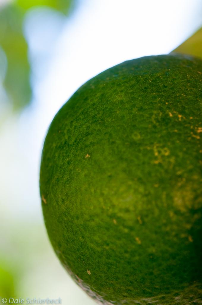 Lime Green Orange