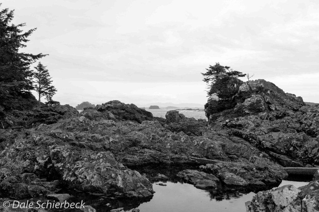 Tofino shoreline