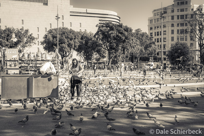pigeons fed in town square