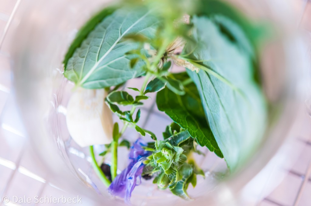 herbs in a jar for preserves
