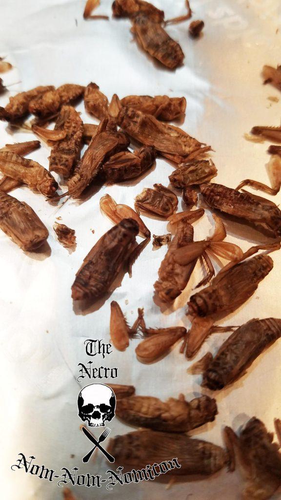 cricket-closeup