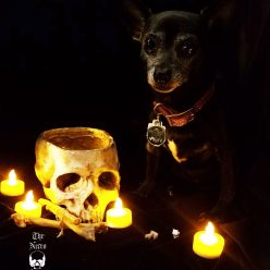 Lucifur, the Lord of Barkness, has Chosen our Winners!