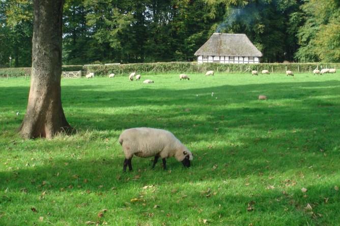 Farm animals on St Fagan's
