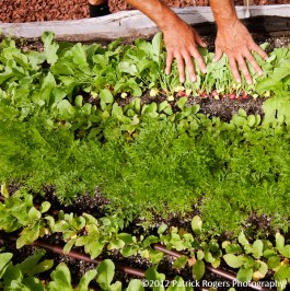 """""""Hands, Dirt, Greens"""" - Ledge Kitchen & Drinks, MA 