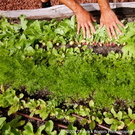 """""""Hands, Dirt, Greens"""" - Ledge Kitchen & Drinks, MA    (c)2012 Patrick Rogers Photography"""