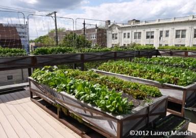 """America's 'Greenest' Restaurant"" - Uncommon Ground, IL || (c)2012 Lauren Mandel"