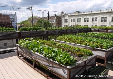 """America's 'Greenest' Restaurant"" - Uncommon Ground, IL    (c)2012 Lauren Mandel"
