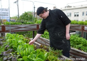 """High Altitude Harvest"" - Uncommon Ground, IL || (c)2012 Lauren Mandel"