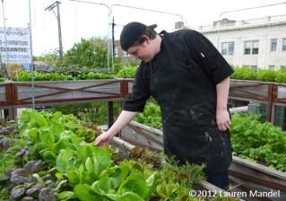 """High Altitude Harvest"" - Uncommon Ground, IL    (c)2012 Lauren Mandel"