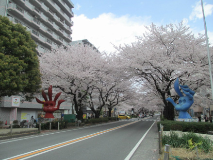 Cherry Blossom and Works by Tarō Okamoto(岡本太郎) who is an art legend.