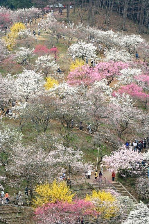 Yoshino Baigō(吉野梅郷) - Main Park