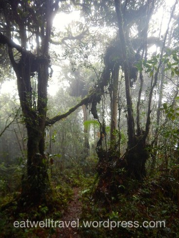Mossy Forest, Cameron Highlands