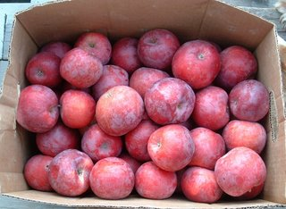 Apples, Tomatoes and Pears – Oh My!