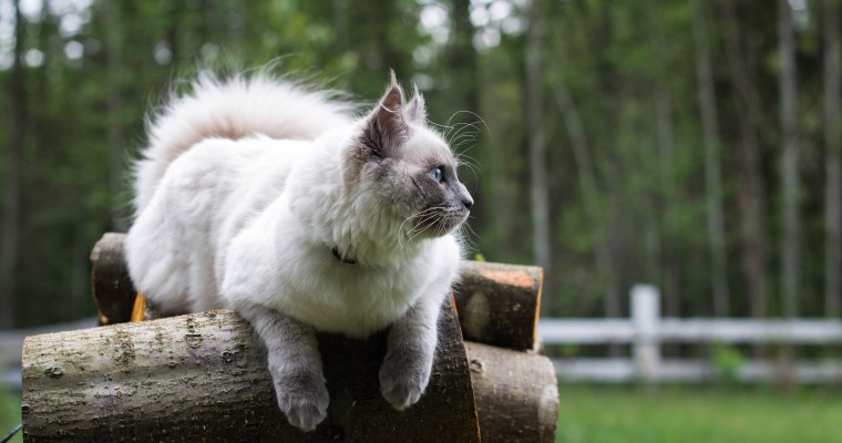 A Year With Dany, the Accidental Farm Cat