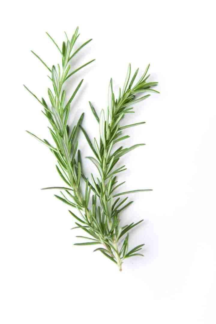 Rosemary for hair loss