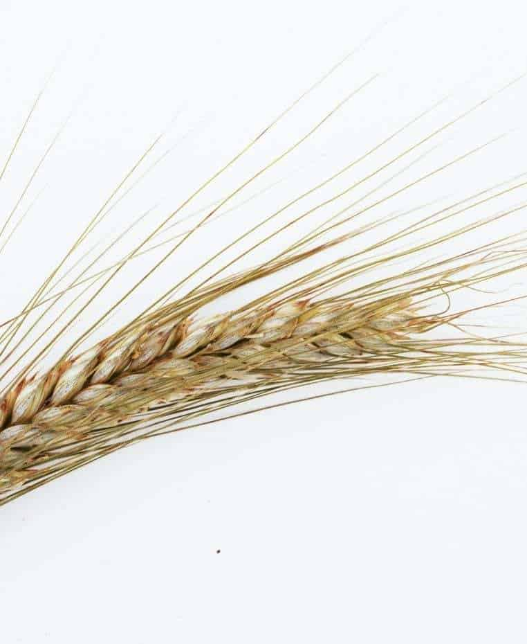How to keep your grain-free diet interesting. Grain free diet benefits.what is grain free dietbenefits of grain free diet