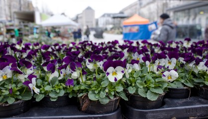 Kouter flower market ghent @eatyourselfgreek