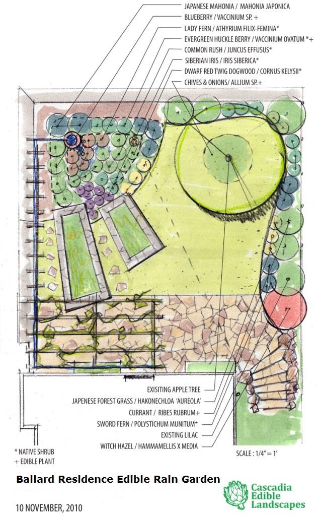 rain garden design