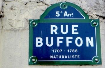 buffon-rue