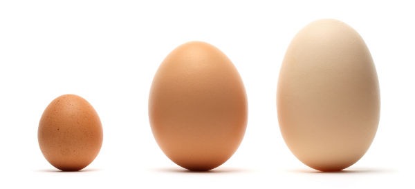 Different Sizes of egg
