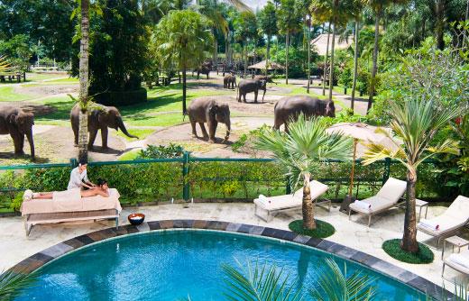 Elephant Safari Park 泳池