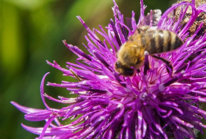 Bi, insekter
