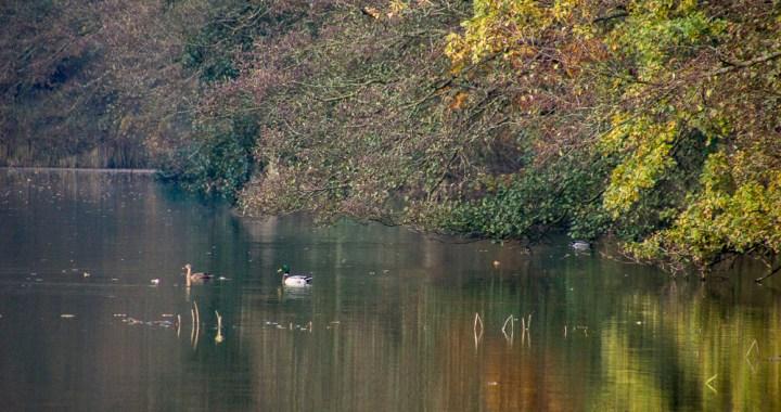 Billedgalleri af efterårsskovene på Vestfyn