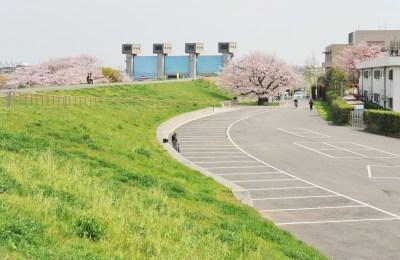 赤羽岩淵関緑地公園 お花見
