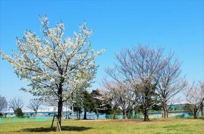 辰巳の森海浜公園 BBQレンタル4