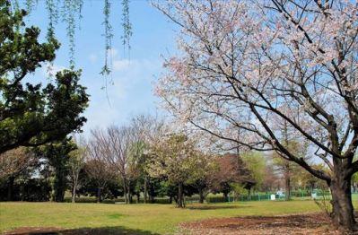 辰巳の森海浜公園 BBQレンタル2