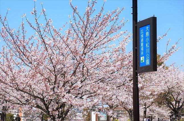 小松川千本桜 BBQ ゴードン