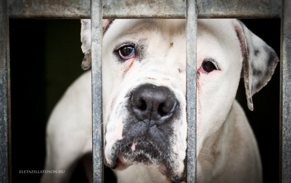 White isolated dog in a metal grid frame