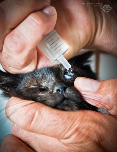 Vet takes eyedrops to sick kitty's eye