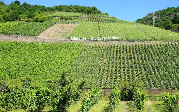 Moselle Winery