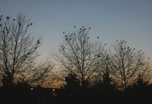 18-evening-crow-party