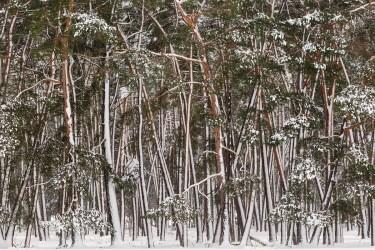 nieve-urbasa