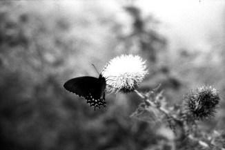 Pentax Spotmatic Negra - Arista Edu 400