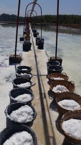 salt harvest- george