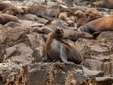 Bruny Island seals - having some shut eye