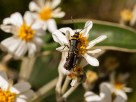 insects hanging out on some sort of daisy with large leaves