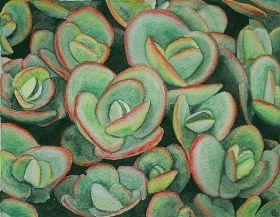Lime Zinger Sedum by Lindi Levison