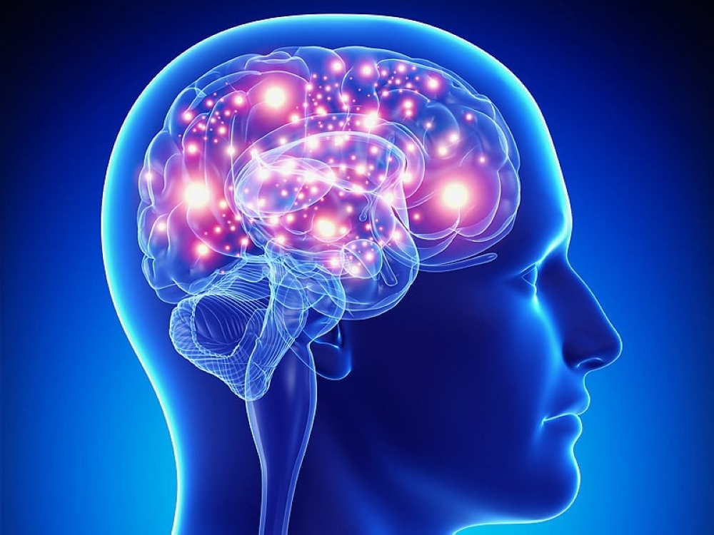 What Is Blood-Brain Barrier And How It Works - ebuddynews