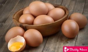 Five Reasons To Eat More Eggs ebuddynews